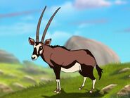 Rileys Adventures Beisa Oryx