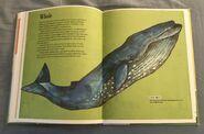 The Dictionary of Ordinary Extraordinary Animals (55)