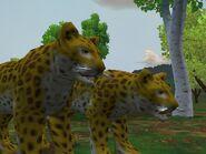 Zt2-indianleopard