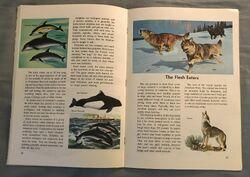 A Golden Exploring Earth Book of Animals (11).jpeg