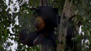 Chester Zoo Sun Bear