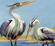 Herons bambi disneyland magazine