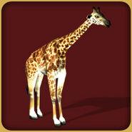 Masai Giraffe (Blue Fang)