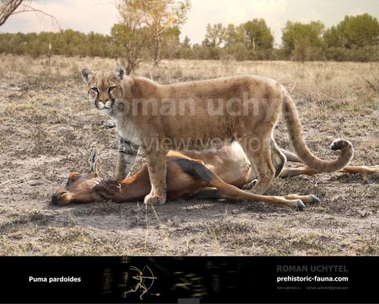 Eurasian Cougar