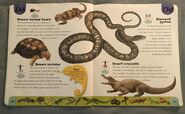 Reptiles and Amphibians Dictionary (7)