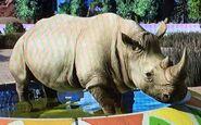 Southern White Rhinoceros ZTX