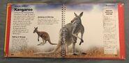 Amazing Animals (Valerie Davies) (8)