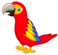 C03000 Parrot