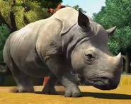 Indian-rhinoceros-zootycoon3