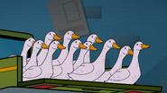 TTG Pekin Ducks