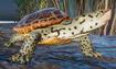 Terrapin, Diamondback (Planet Zoo)