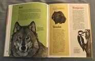 The Dictionary of Ordinary Extraordinary Animals (57)