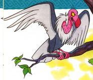 ANFLS Vulture