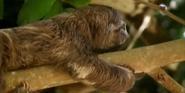 MMHM Sloth