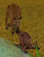 Red-kangaroo-zoo-empire