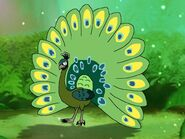 Rileys Adventures Green Peafowl