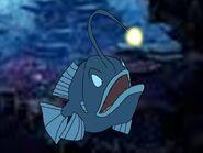 Rileys Adventures Humpback Anglerfish