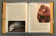 Scholastic Encyclopedia Of Animals (34)