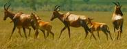 Serengeti Topis