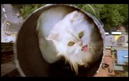 Snowbell falls in a paint can