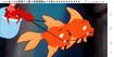 TLM Goldfish