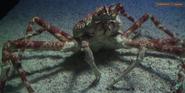 Toledo Zoo Crab