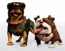 Alpha-beta-gamma-dogs-600x694.jpg