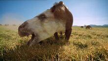 BBC.Prehistoric.Park.4of6.Saving.the.Sabretooth.XviD.AC3.6ch.MVGForum.avi snapshot 09.44 -2016.10.21 20.09.24-.jpg