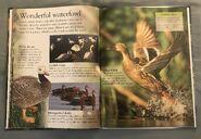 Birds (Eye Wonder) (12)