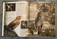 Birds (Eye Wonder) (2)