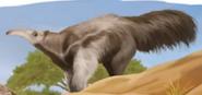 TLK Hakuna Matata Book Anteater