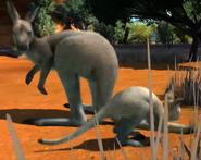 Antilopine-kangaroo-zootycoon3