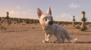 Bolt is lost in the desert