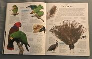 DK Encyclopedia Of Animals (127)