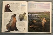 DK Encyclopedia Of Animals (146)