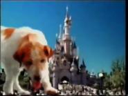 Dog HISTA