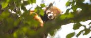 R d panda top desktop