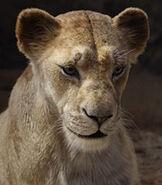 Sarabi in The Lion King (2019)