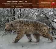 Smilodon fatalis (V4)