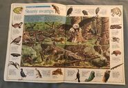The Great Animal Search (3)