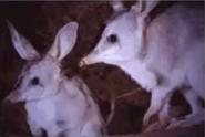 Blinky bills ghost cave - bilby