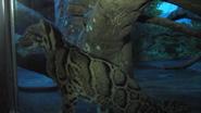 Cincinnati Zoo Clouded Leopard