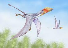Dimorphodon2DB.jpg
