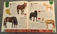 Horse Dictionary (7)