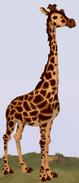 Rothschild's Giraffe WOZ