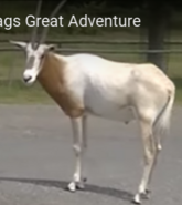 Six Flags Oryx