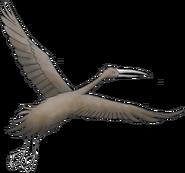 Stymphalian bird by tequilasunburn d7x55vm