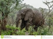 Wildlife Elephants in the Jungle