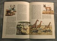 A Golden Exploring Earth Book of Animals (21)