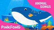 Blue Blue Blue Whale